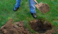 NEED 9 HOLES DUG FOR TREES - $100 - MUST HAVE OWN CAR!
