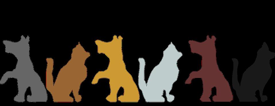 PetSupply24