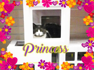 Princess is just waiting for her forever home. Carma Moncton