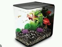 Small Biorb fish tank