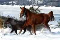 Pensions pour chevaux