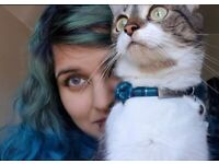 Looking to rent: professional + cat-friendly tenancy!