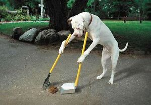 Dog Obedience Training, for those who expect RESULTS