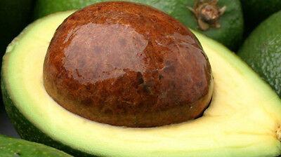 Avocado Butter- 8 oz