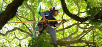 Call our you need Any Tree Removal Expert