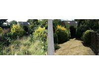 Gardening / Designing / Maintenance