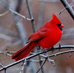 Cardinal Finds and Treasures