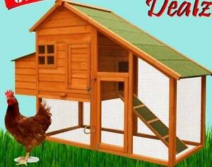 """Silver Laced Wyandottes"""" Chickens COOP SET UP!! XMAS PRESANT Forest Grove Margaret River Area Preview"""