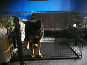 large dog crate (kong )
