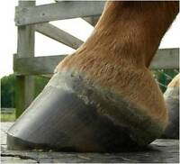 Hoof Trimming clinic in PA - Last chance to sign up!