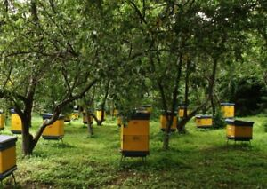 apiaries for sale