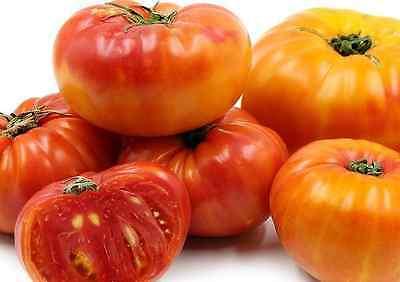 Heirloom PINEAPPLE Tomato❋100 Seeds❋LARGE 1-2 LB BEEFSTEAK TOMATOES Few - Pineapple Tomato
