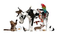 Are you looking for a pet sitter? :)
