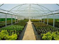 **FULL-TIME PLANT NURSERY STAFF REQUIRED FOR IMMEDIATE START** Chelmsford area