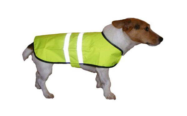 How to Buy a Reflective Dog Coat