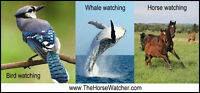 Free Guided Horse walks   - Introduction to Horse Watching