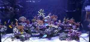 125 gallon saltwater aquarium