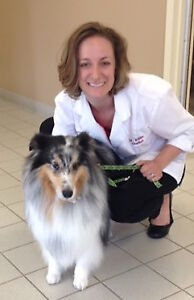 Laparoscopic Surgery option for PETS-Here in Kingston!!!