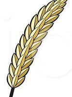 Certified Brandon Wheat Seed for sale