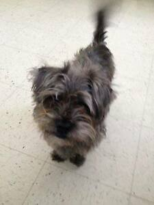 OVLPN - Lost dogs in Greely