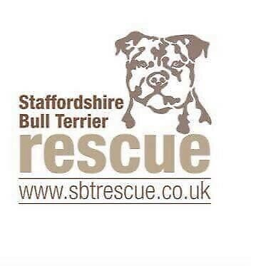 Staffordshire Bull Terrier Rescue