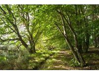 Land/woodland Wanted