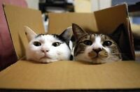 *>>> 99 CENT BOXES & TAPE! 50% OFF MOVING/PACKING SUPPLIES! <<<*