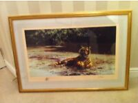 "Rare "" Indian Siesta "" by David Shepherd - signed limited edition print picture 13 of 1300 in 1982"