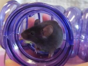 """Baby Female Small & Furry - Mouse: """"Annie"""""""