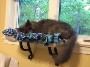 "Adult Male Cat - Domestic Long Hair-gray: ""Wally"""