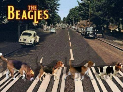 Funny Dog Beagles Crossing Road Refrigerator / Magnet Gift Card Insert
