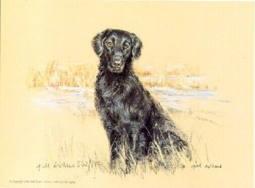 Flat Coated Retriever Limited Edition Art Print by UK Artist Gill Evans*