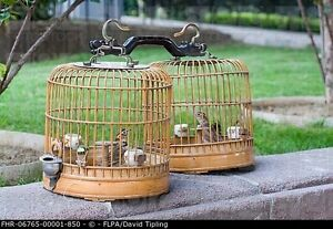Looking for wooden cage for canaries