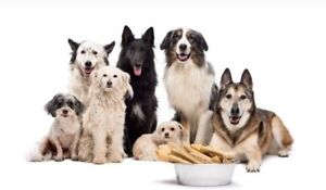 EXPERIENCED DOG SITTER IN HAMILTON!