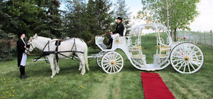 Horses and Carriage for Events, Functions, Special Occasions