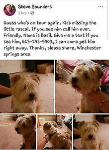 OVLPN - Lost dog in Winchester Springs