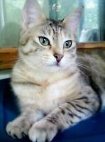 young female cat