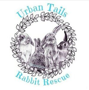 Rabbit Rescue - Spots Available for Rescue!