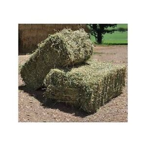 HAY FOR SALE Dayboro Pine Rivers Area Preview