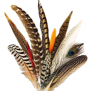 Feathers required for art projects Currambine Joondalup Area Preview