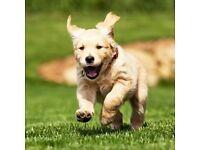 DOG WALKING £6