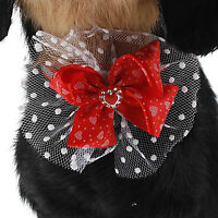 Boucles assorties colliers pour chins ou chats