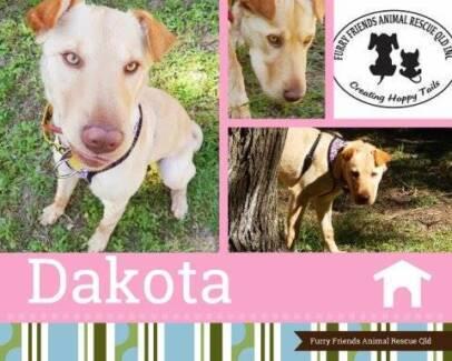 Dakota, loving puppy - ADOPT ME! Ipswich Ipswich City Preview