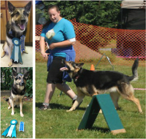 Fast and effective dog training
