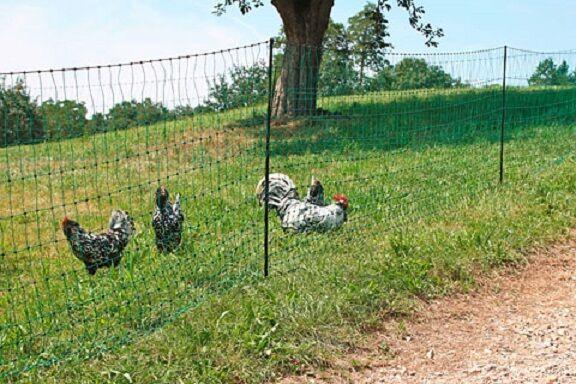 Geflügelnetz elektrifizierbar grün Weidezaun Hühnerzaun Geflügelzaun