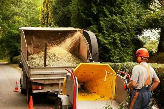 Wood chippings (bark) plus tree cutting services