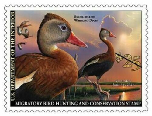 #RW87  2020 Federal Duck Stamp  - MNH (Ships after July1)