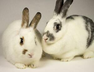 "Young Male Rabbit - Bunny Rabbit: ""Summer & Ollie"""