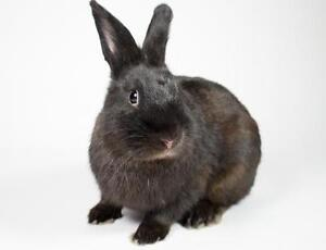 "Young Male Rabbit - Bunny Rabbit: ""Pax"""