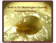 Pond Snails